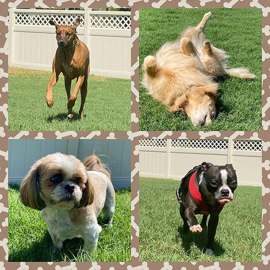 Dog Walking Ocala - Leashes to Leads