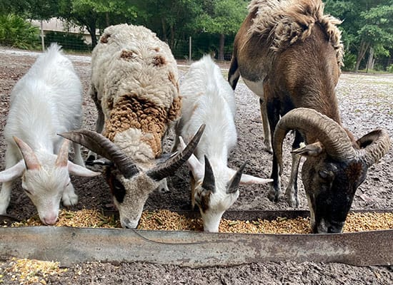 Equine & Livestock Care