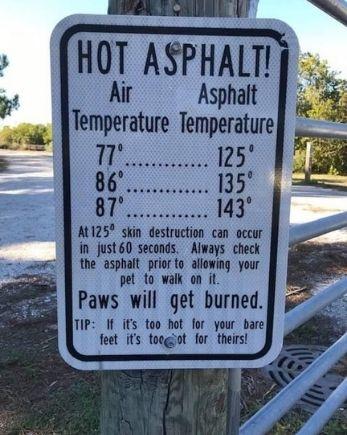 hot asphalt Florida Dog paws
